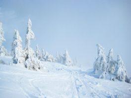 Неделя на Драгобрате. Регулярный горнолыжный тур!